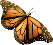 [Resim: 1524-Monarch.png]